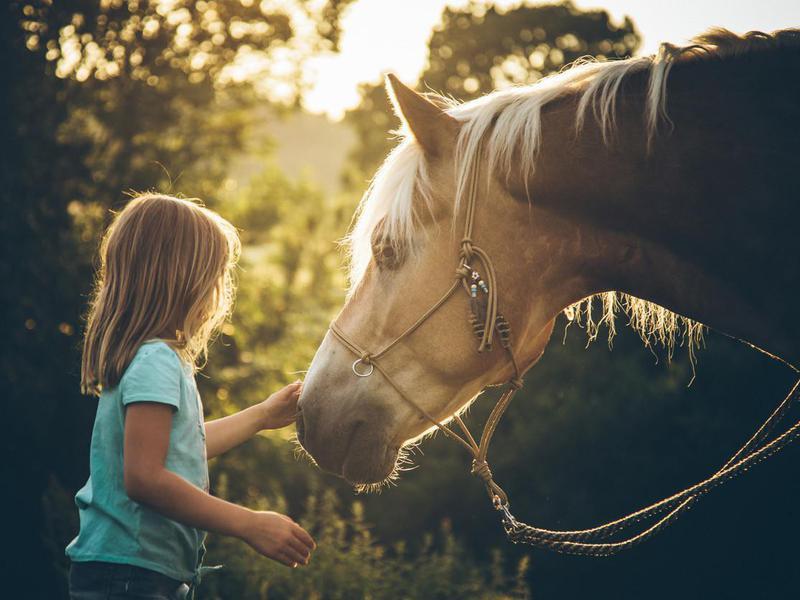 Little Girl with her Haflinger pony