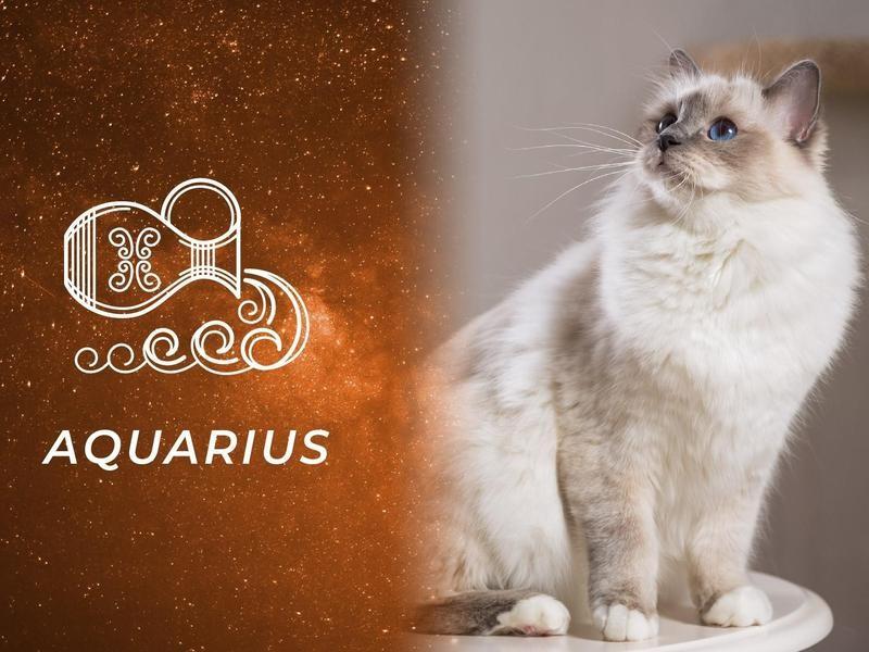 Aquarius: Birman