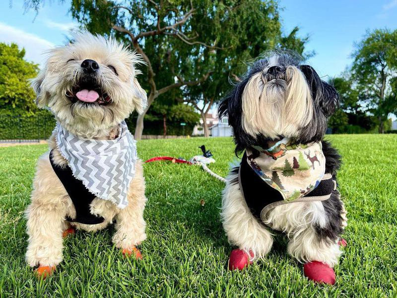 Two dogs in a park