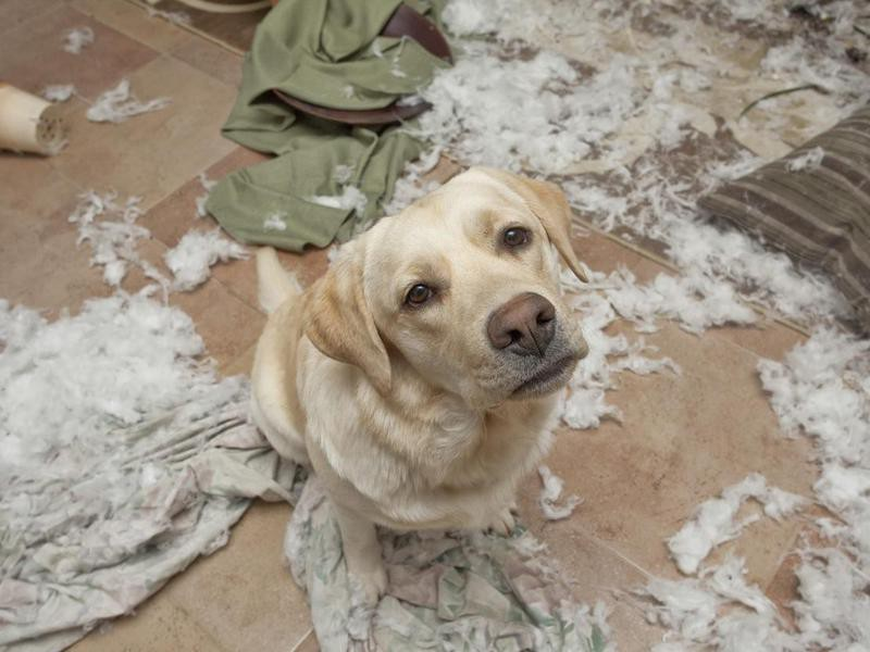 Puppy destroys a living room