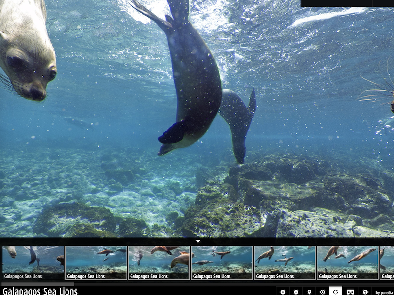 Galapagos virtual