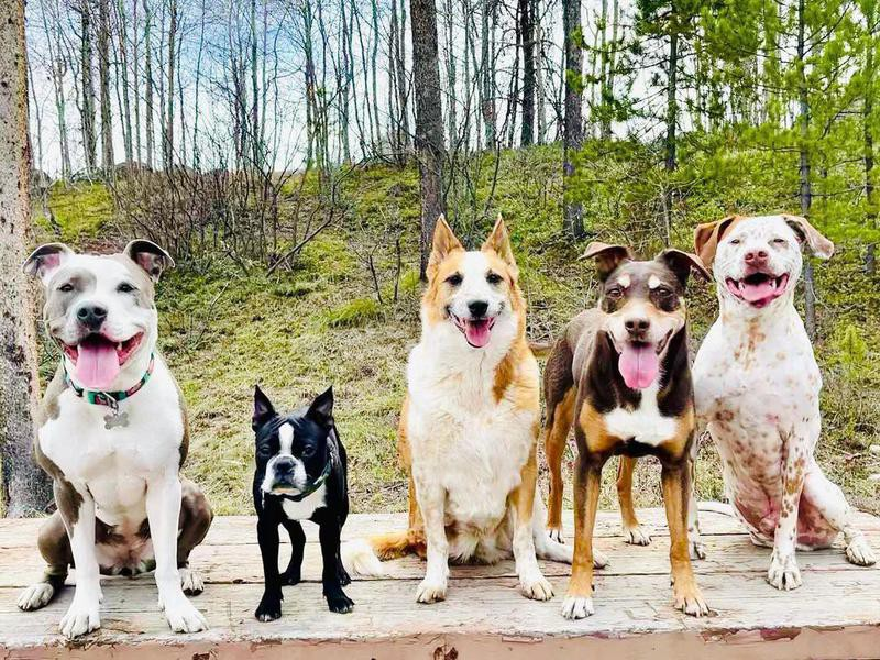 Group of dogs in forest