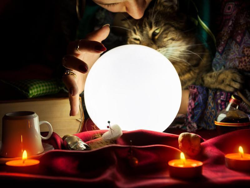 Pet psychic