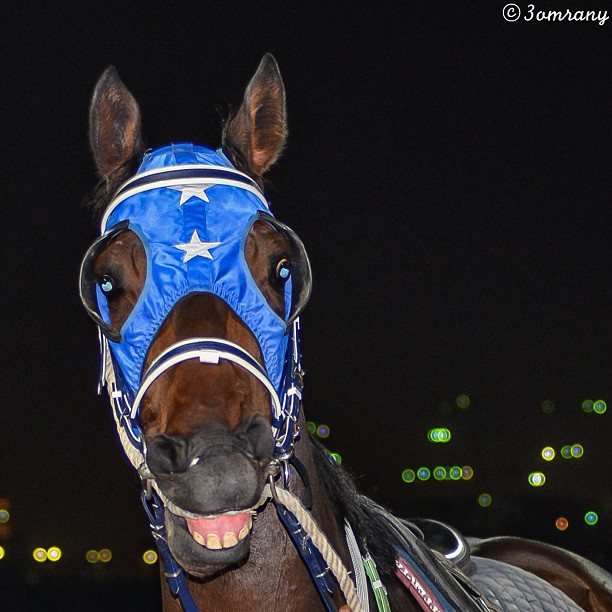 Race Horse Smiling