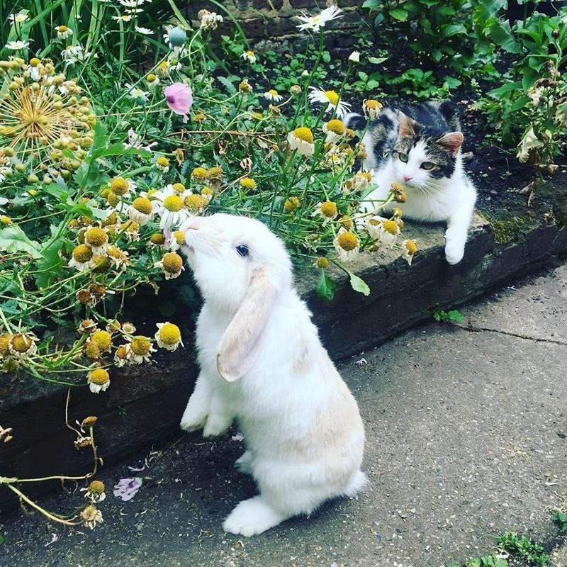 Cat and rabbit smelling flowers