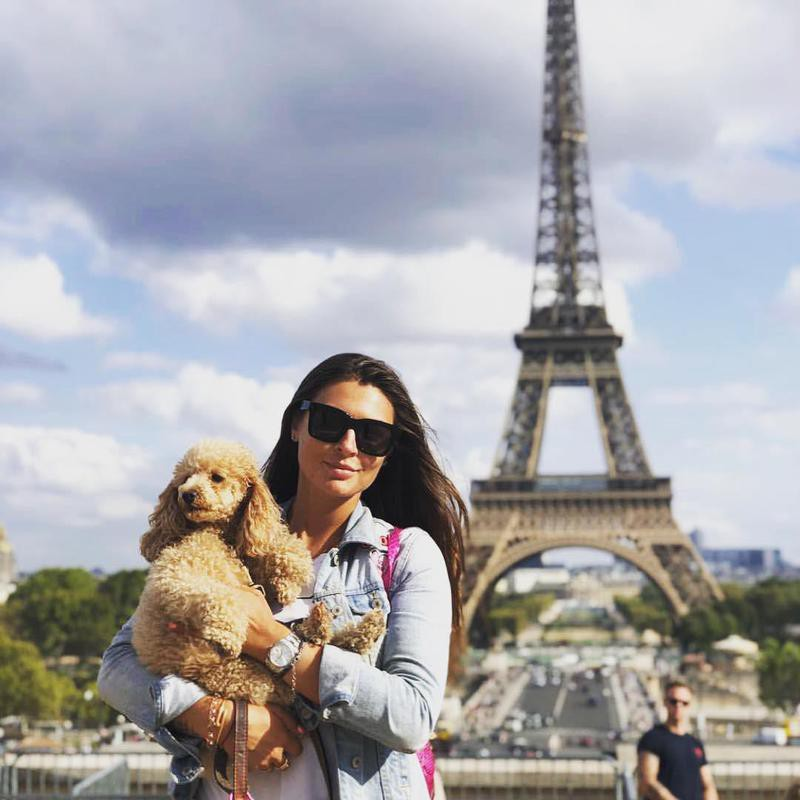 Cute toy poodle in Paris