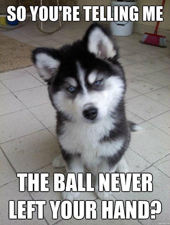 Dog can sense a lie